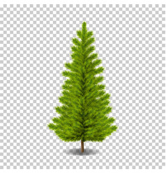 realistic christmas tree vector image
