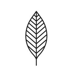 Walnut leaf linear icon vector