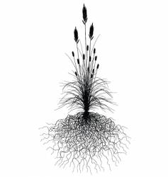 grass with roots vector image vector image