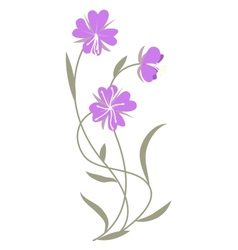 lilac flowers vector image
