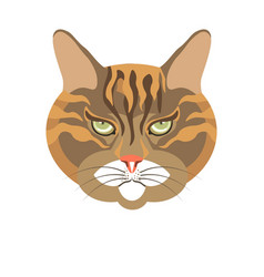 abyssinian old cat colorful portrait isolated on vector image vector image