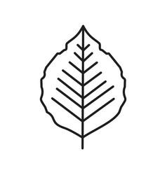 poplar leaf linear icon vector image