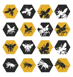 Set of bees vector