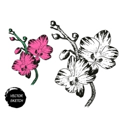 Tropical Flowers Sketch Vector Images Over 11 000