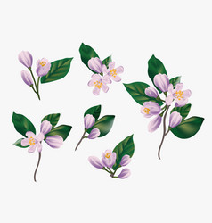 Watercolor violet flowers isolated on a white vector