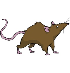 wild rat vector image