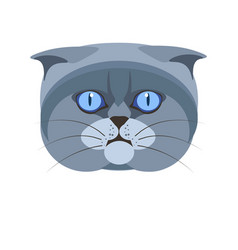 highland scottish fold britain breed of grey cat vector image