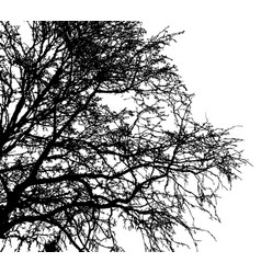 black leafless tree branches vector image