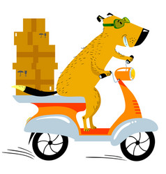 Dog working in the delivery pet character scooter vector