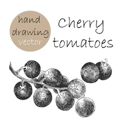 Hand Drawn Cherry tomatoes Monochrome sketch vector