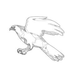 Northern goshawk swooping doodle art vector