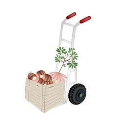 Hand Truck Loading Fresh Taro in Shipping Box vector image vector image