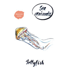 jellyfish watercolor vector image