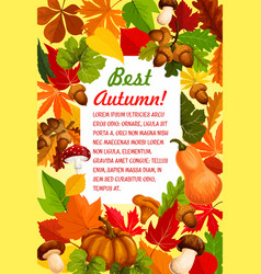 autumn leaf and pumpkin banner for fall season vector image