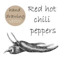 Hand Drawn red hot chili peppers Monochrome vector