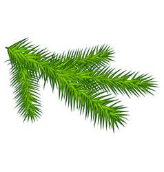 green juicy one spruce branch vector image vector image