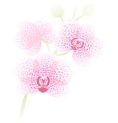 Orchid branch vector image