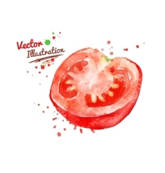 Half of tomato vector image vector image