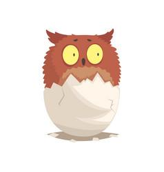 Adorable newborn brown owlet in broken egg shell vector