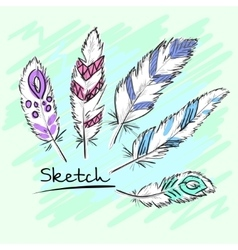 Set of beautiful colored feather Sketch feathers vector