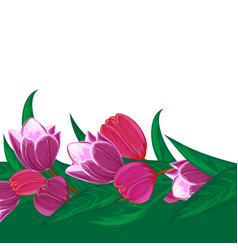 tulips flower bouquet decorative frame or spring vector image