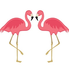 Two pink flamingo vector