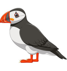 Cartoon puffin isolated on white background vector