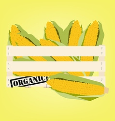 Corn in box vector image