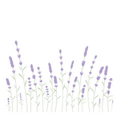 Cute cartoon black cat on floral lavender vector