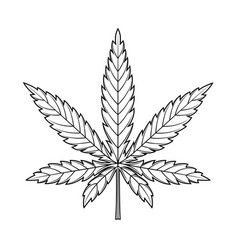 Marijuana leaf or cannabis leaf weed icon vector