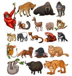 Wild animals on white background vector