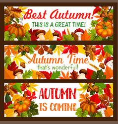 thanksgiving banner set of autumn harvest holiday vector image vector image