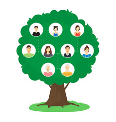 cartoon family tree infographics concept card vector image