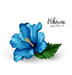 Realistic hibiscus flower leaves blue vector