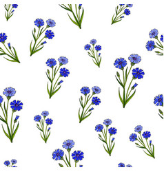 Seamless pattern with cornflowers vector