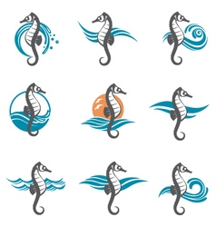 Set of sea horse vector