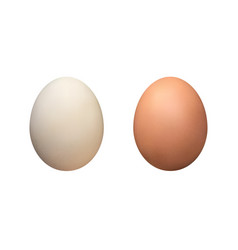 white and brown eggs isolated vector image