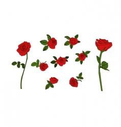 red rose set vector image