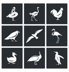 Birds icons set vector image