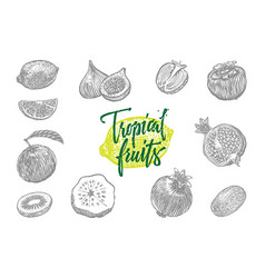 tropical fruits icon set vector image