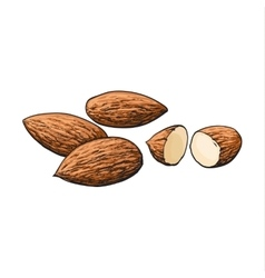 Whole and cut almond nuts isolated on white vector image