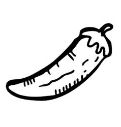 Chilli doodle vector