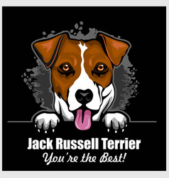 jack russell terrier - peeking dogs - breed face vector image