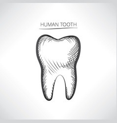 tooth isolated tooth hand drawn sketch icon tooth vector image