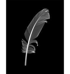 White Bird Feather Drawn in Black Background vector image