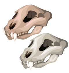 Old skull of saber-toothed tiger or other animal vector image