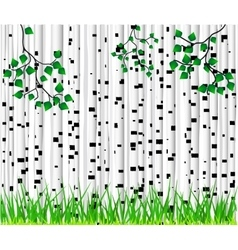 Birch trees and grass background vector