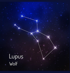 constellation in the night starry sky vector image