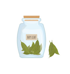 dried bay leaves stored in clear jar isolated on vector image