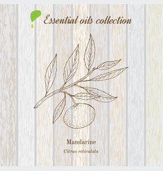 pure essential oil collection mandarine wooden vector image